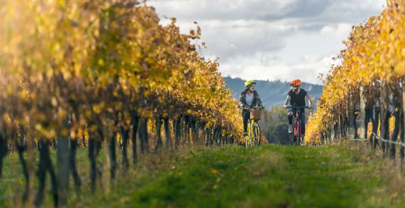 Couple biking through the vines small