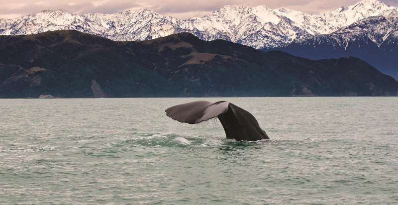 Whale Tail Winter Large